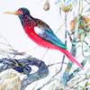 Akvarelės paveikslas «Raudonas Paukštis Sode»