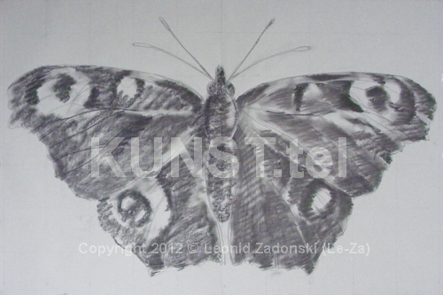 Charcoal Sketch of Butterfly. (Le-Za)